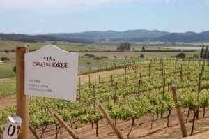 Casas del Bosque Winery Vineyards