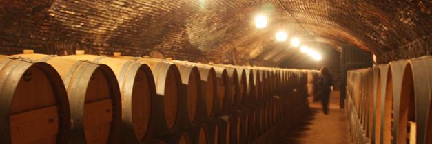 ConchayToro - Cellars