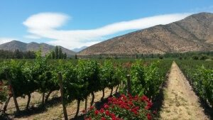 Chilean-winery-santa-rita
